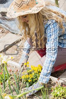 Blonde woman planting yellow flowers