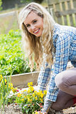 Blonde woman planting yellow flowers smiling at camera