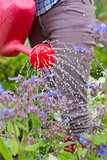 Woman watering her flower bed with red watering can