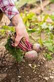 Man holding fresh beetroot