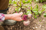 Man holding fresh out of the ground beetroot