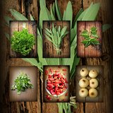 Vintage collage of fresh herbs