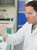 Male scientist analyzing pills in the laboratory