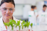 Female scientist with young plants at laboratory