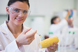 Close up of scientific researcher injecting corn cob at lab