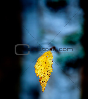 Branch of a tree with on autumn yellow leaf against dark blue background