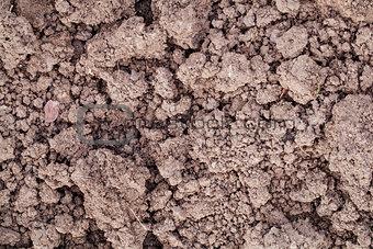 clay garden soil