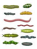 Caterpillars and worms