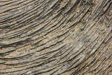 Stone texture lines.