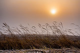 Misty morning sunrise over grass