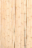 Wooden wall of bamboo