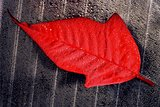 abstract red  leaf