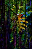 leaf cenote