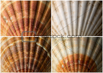 Four Close up of Seashells