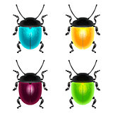 beetles set