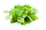 Bunch of fresh  Basil spice herb /  isolated