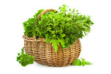 Collection of Fresh Spicy Herbs in Basket / isolated