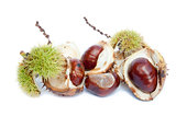 Excellent macro conker horse chestnut isolated on white backgrou