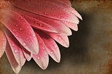 Vintage retro grunge effect on gerbera daisy flower