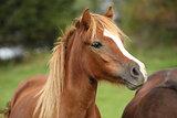 Nice young pony