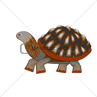 A turtle on a white background