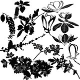 magnolia, cherry, cherry and apple tree twigs vector