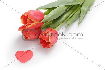 three tulips with paper heart