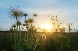 sunset over meadow with flowers