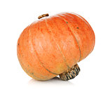 Ripe small pumpkin