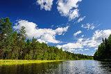 Karelian woods