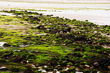 Low Tide Debris