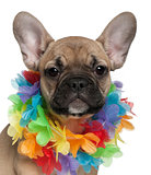 French Bulldog puppy, 3 months old, wearing a Hawaiian lei in front of white background