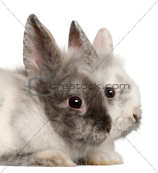 Portrait of rabbits in front of white background