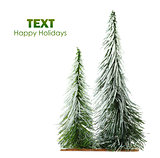 Beautiful isolated Christmas tree