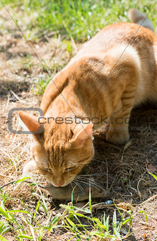 Cat and mouse in garden