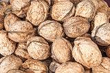 Freshly picked walnuts