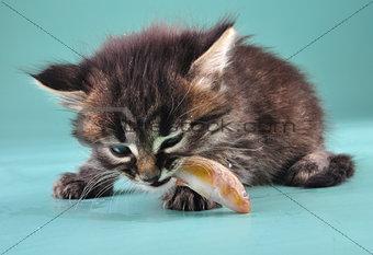small kitten eats a fish