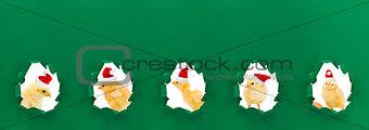 Christmas chicken portraits