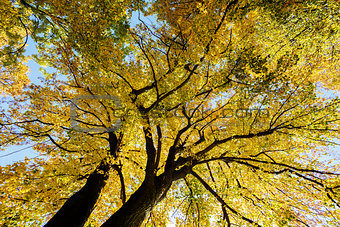 autumn trees on blue sky