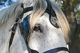 leather bridle on a horse