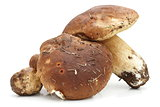 porcini agaric on white background