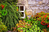 Colorful garden plants with wall and window background