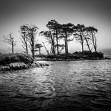 Dramatic monochrome view of trees in the lake