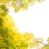 Autumnal leaves against the clear sky