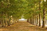 Walkway along lined trees in the park
