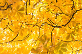 Branches and autumnal leaves