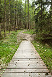 Wooden walkway along forest