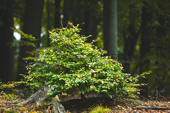 Plant against tree trunks in the forest