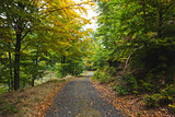 Scenic shot of narrow road along forest
