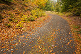 Leaves on tarmac curved country road along trees